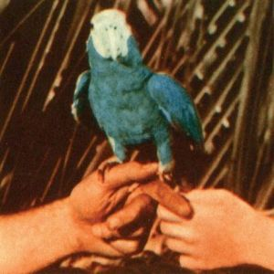 Andrew Bird's new album, Are You Serious, features collaborations with Fiona Apple and Blake Mills.